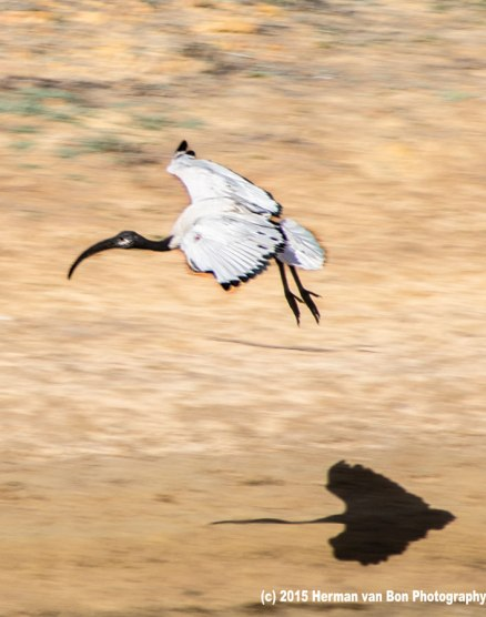 shadow-flying