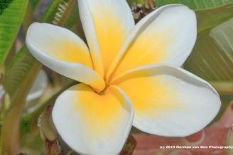 flower10jan15-1