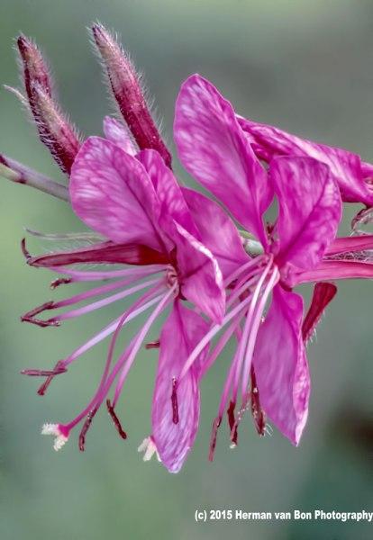flower6jan15