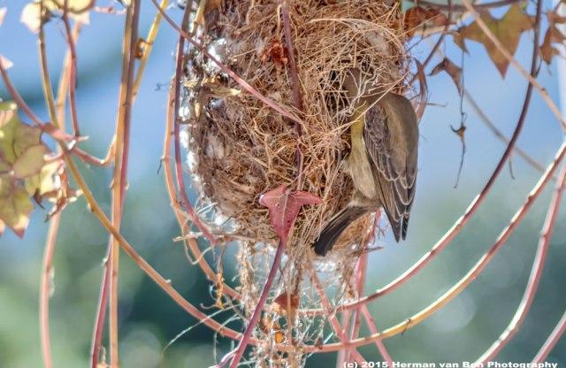 nest-inspection
