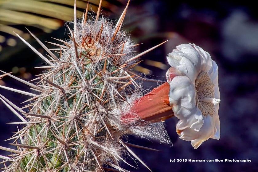flower1feb15