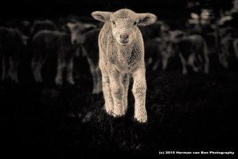 silence-of-he-lambssssst