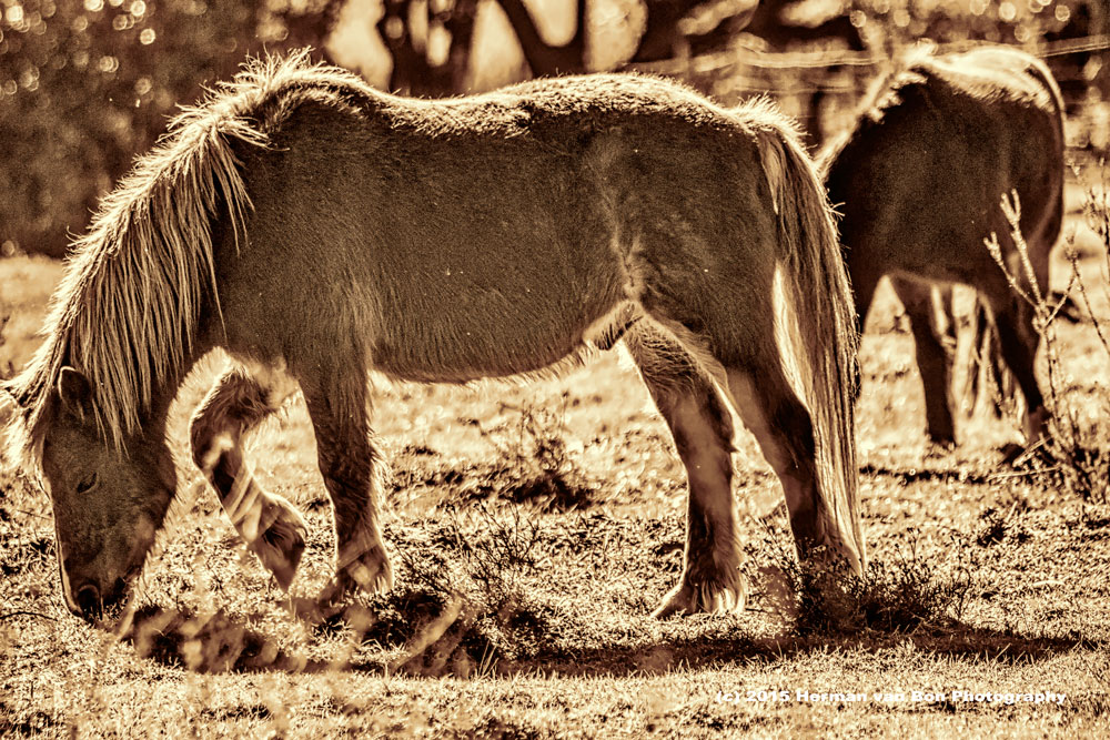 along-the-road-horses