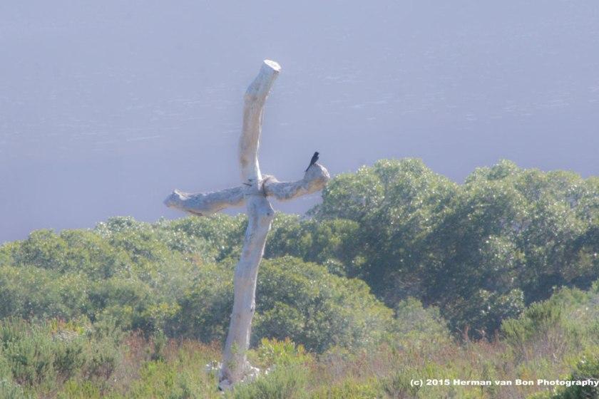 as-the-crow-flies-cross