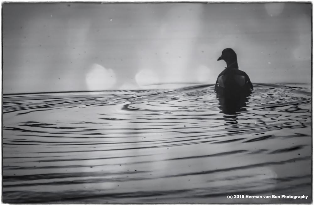 duck22sept15