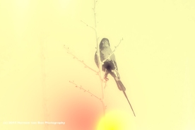 experiment-with-a-sunbird