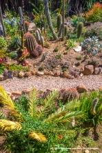garden_DSC5757