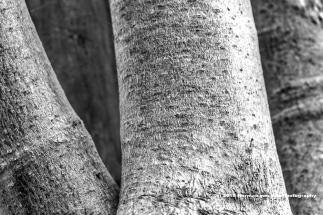 wood-moringe