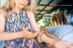 The Snake Lady with American Corn Snake