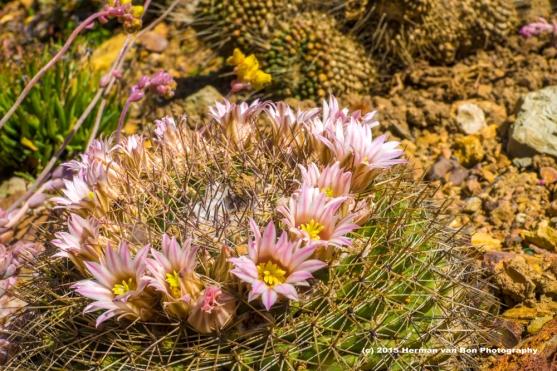 cactus24sept15-2