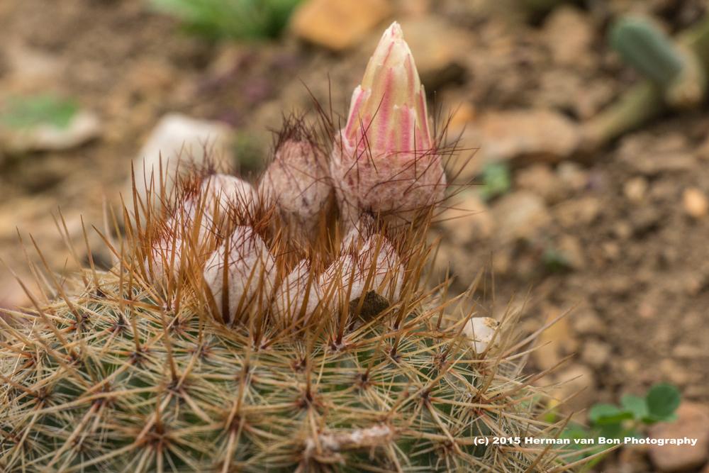 cactus31oct15-1