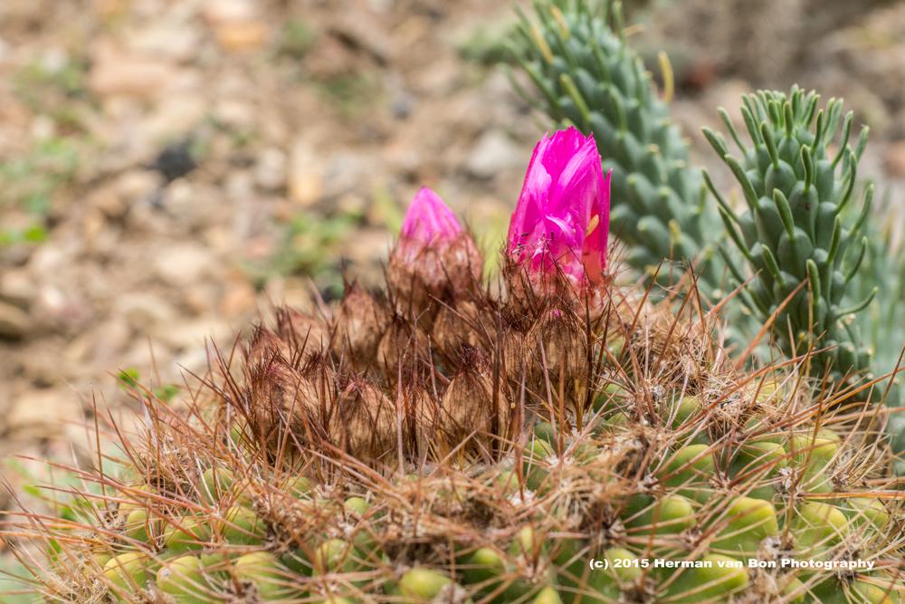 cactus31oct15-2