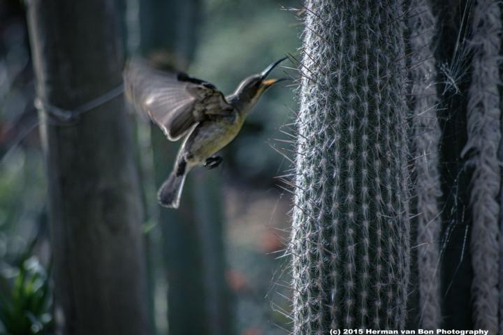 early-bird1