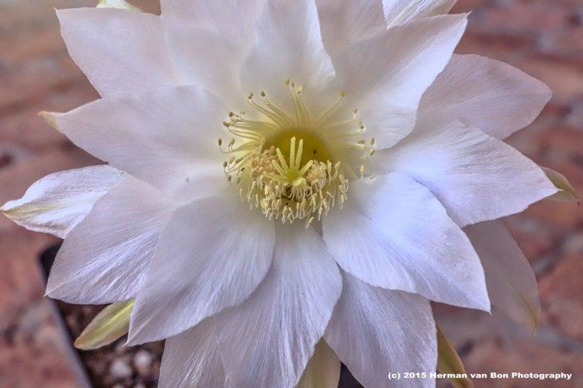 flower13nov15-1
