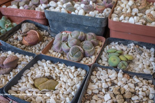 livingstones14nov15