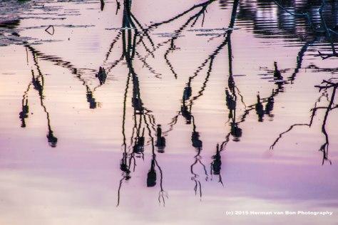 reflection7nov15
