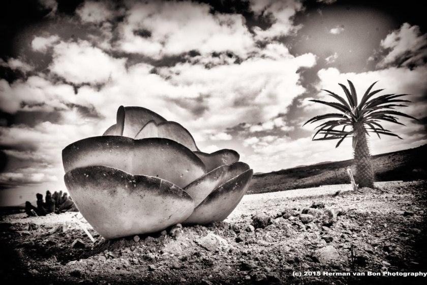 sculptural-garden-3