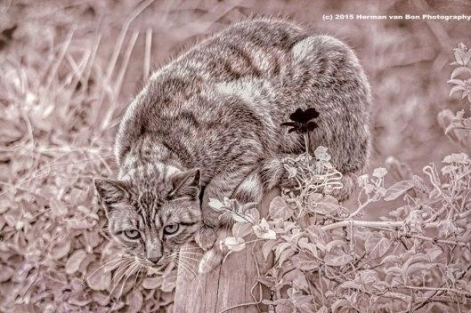 street-cat