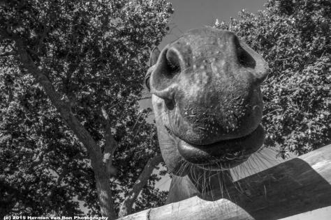 horse17dec15-1