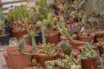 Diverse plants from R 20.00 to R 150.00