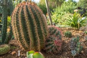 Fero Cactus R 2000.00
