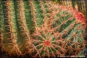 fero-cactus