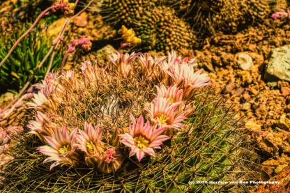 cactus15nov15