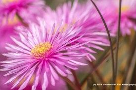 daisy11oct15