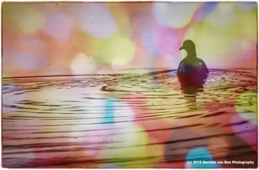 Duck and Bokeh