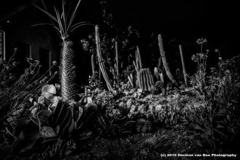 nightlife-in-the-garden
