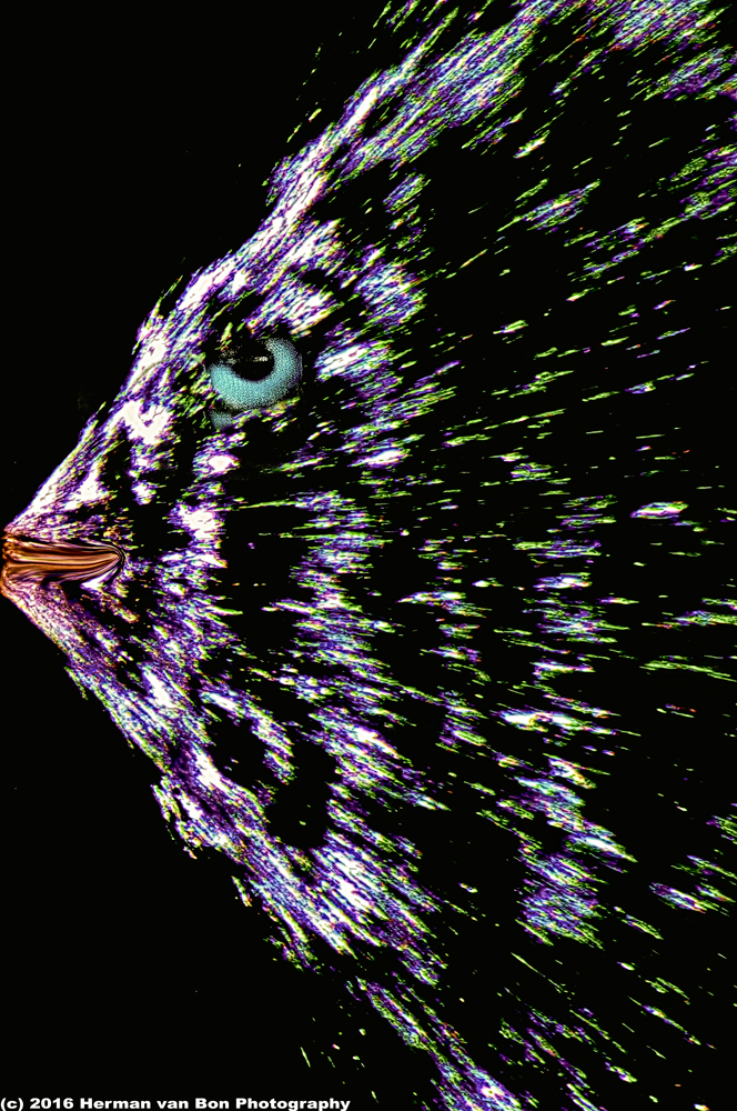 porcufish-revisited