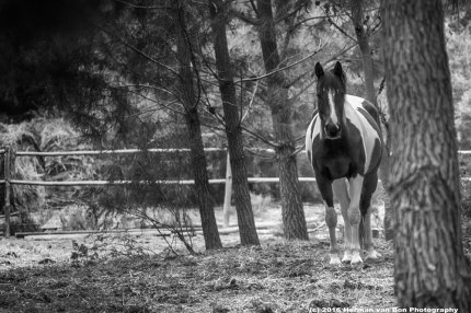 horse-in-the-forest