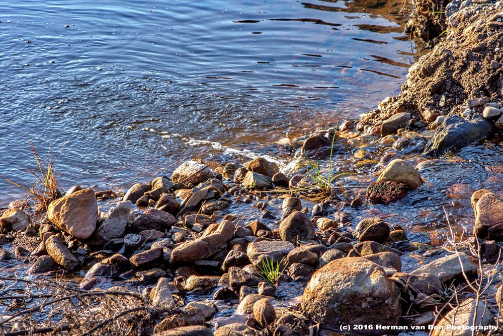 Napier Rapids