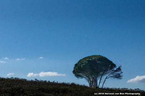 Tree-sandys-glen