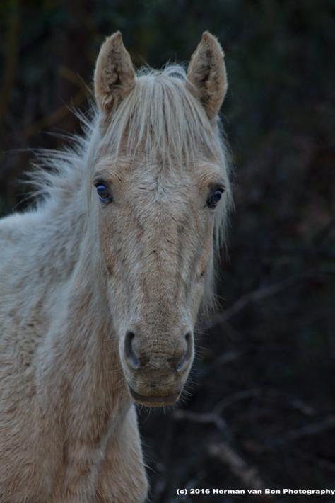 horse31aug16