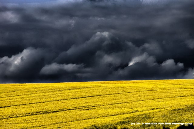 the-last-of-the-canola-pictures-this-year