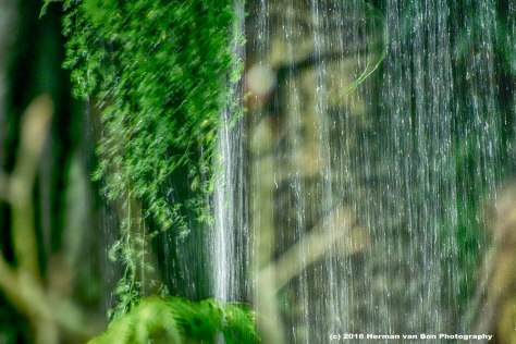 water-curtain-cape-floral-kingdon