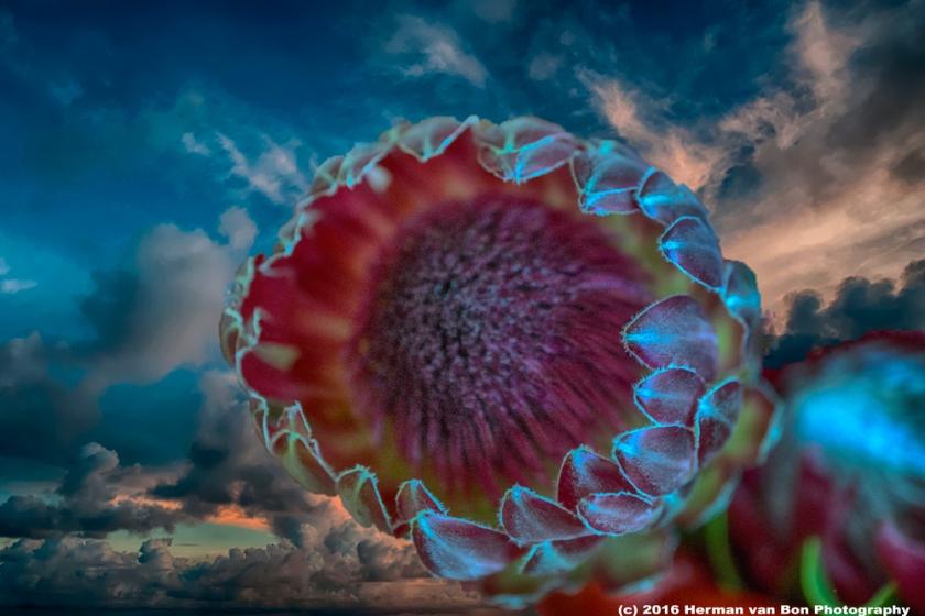 flower10sept16-2