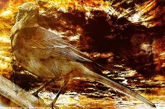 bird-day-3hr_pe