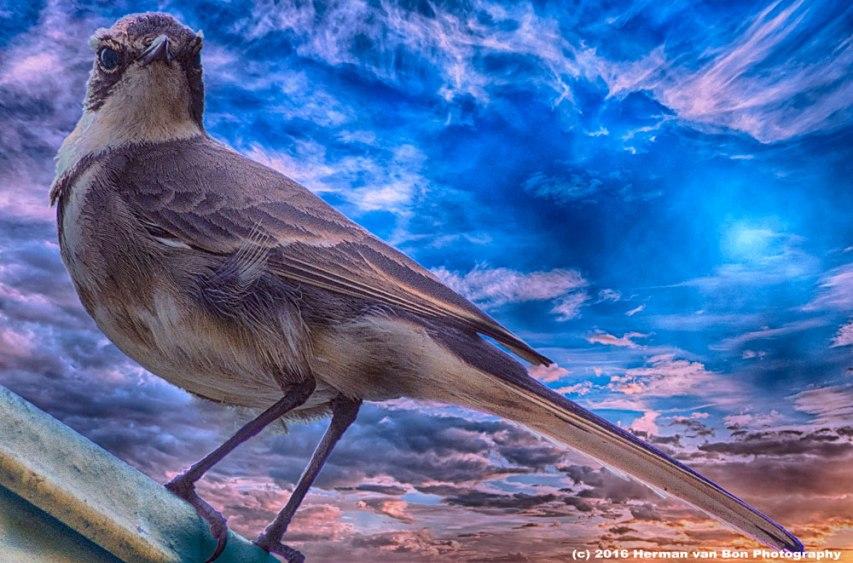 bird-day-3web