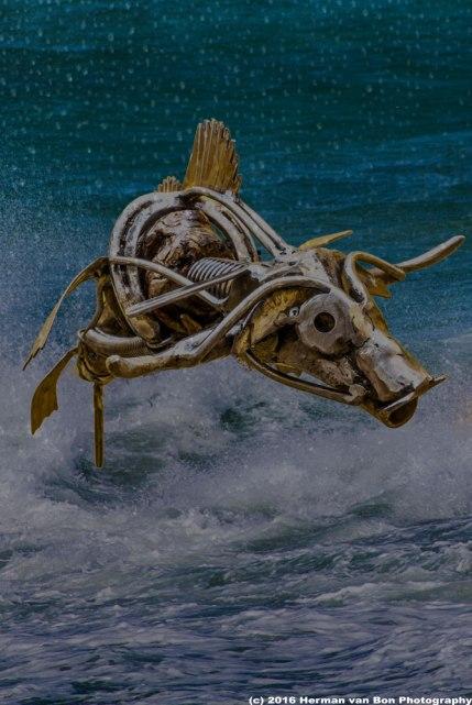Flyring Sea Cow
