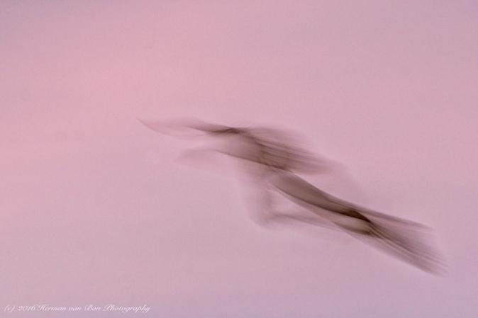 golden-hour-flight1