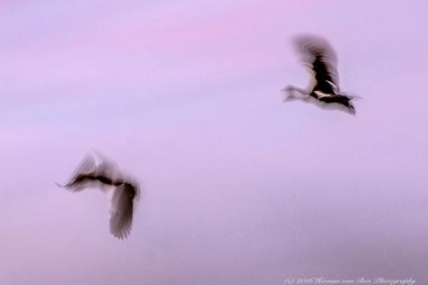golden-hour-flight2