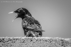 bird7n0v16-3
