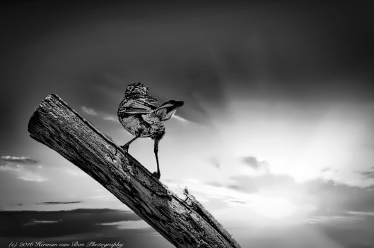 bird7nov16-2