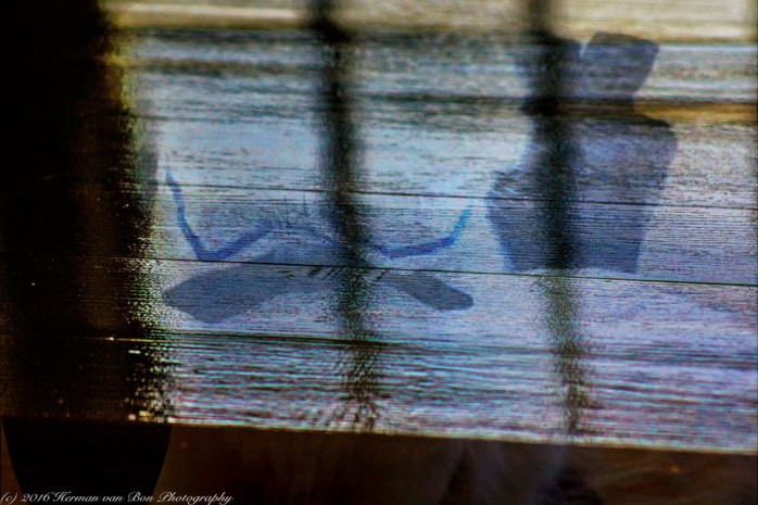 reflection-on-wood