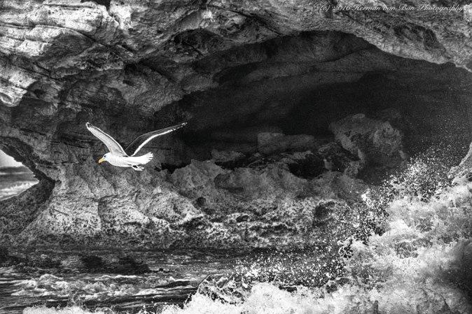 segull-in-flight