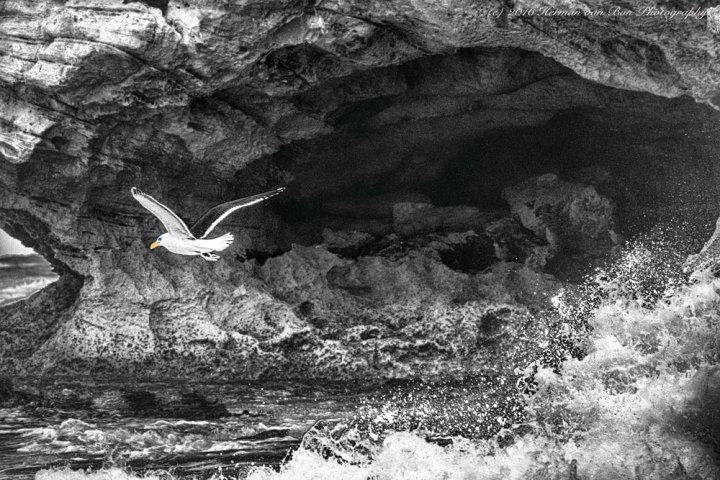 segull-in-flight