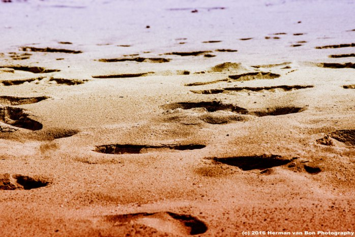 traces-on-the-beach