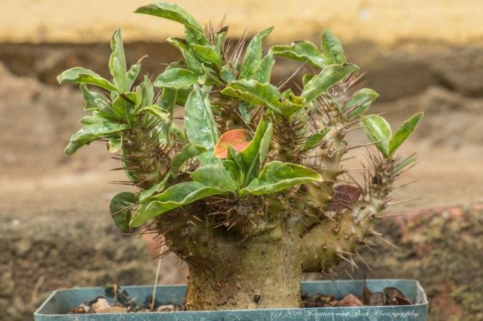 vet-plant